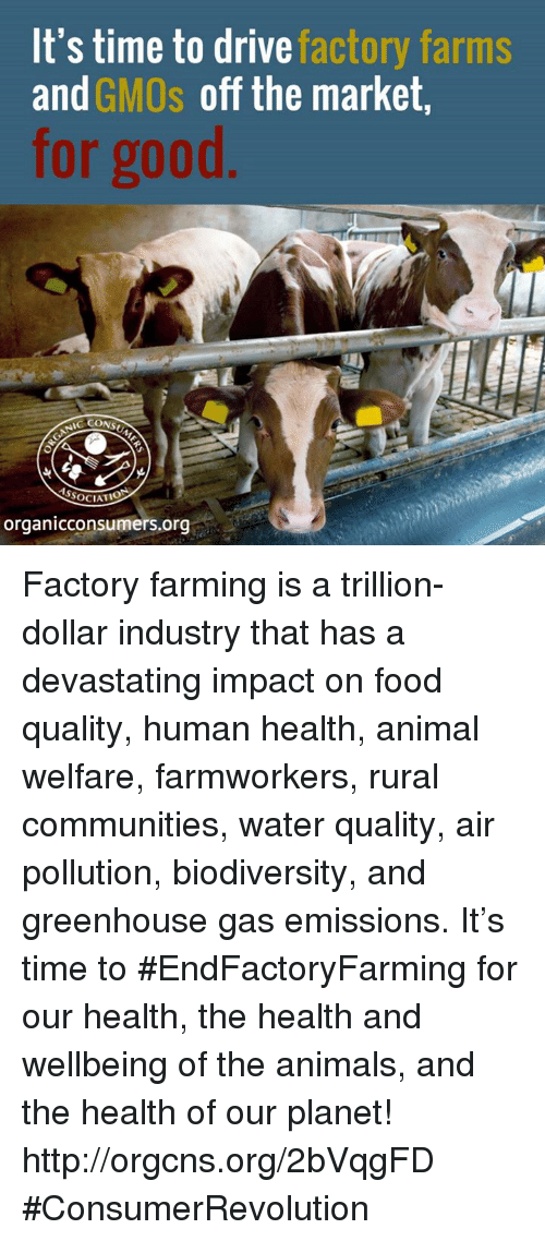 industrious: It's time to drive  factory farms  and  GMOs off the market,  for good  SSOCIATIO  organicconsumers.org Factory farming is a trillion-dollar industry that has a devastating impact on food quality, human health, animal welfare, farmworkers, rural communities, water quality, air pollution, biodiversity, and greenhouse gas emissions. It's time to #EndFactoryFarming for our health, the health and wellbeing of the animals, and the health of our planet! http://orgcns.org/2bVqgFD #ConsumerRevolution