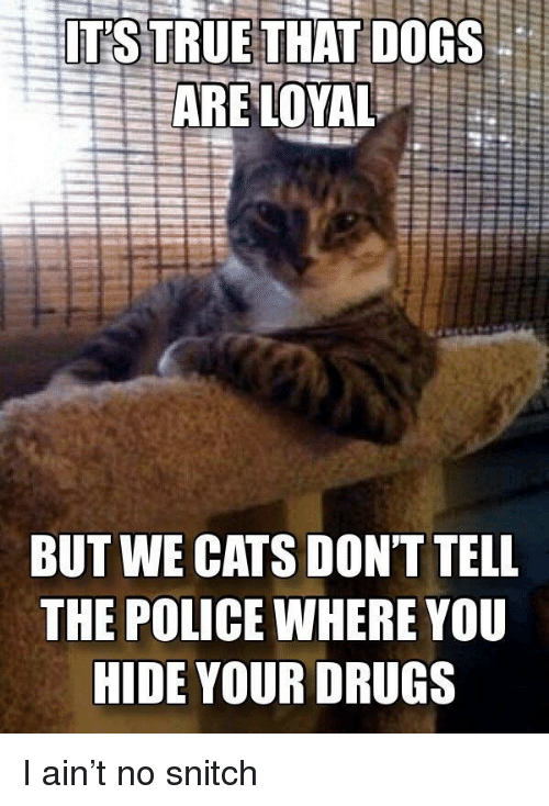 Cats, Dogs, and Drugs: ITS TRUETHAT DOGS  BUT WE CATS DONT TELL  THE POLICE WHERE YOU  HIDE YOUR DRUGS I ain't no snitch