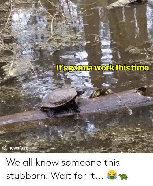 Time, All, and For: It'sgonna workthis time  ::: newsflare We all know someone this stubborn! Wait for it... 😂🐢