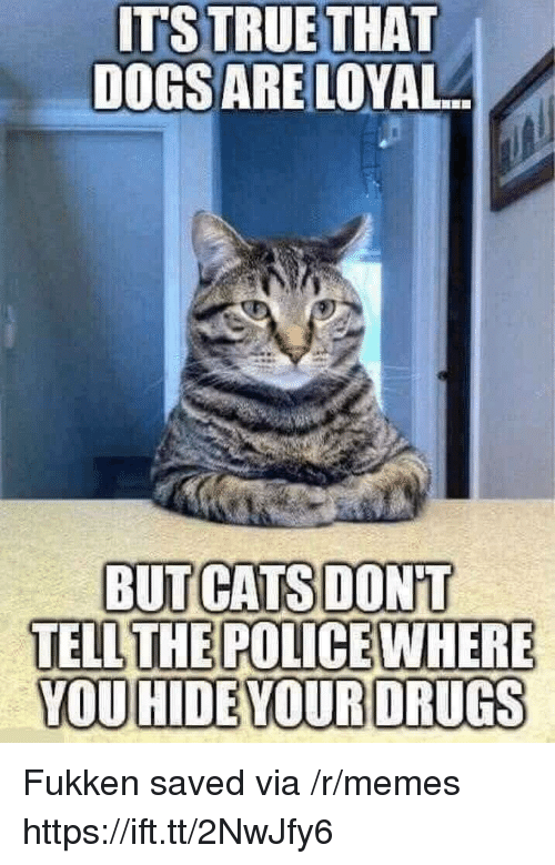 Cats, Memes, and Police: ITSTRUETHAT  DOGSARE LOYAL  We  BUT CATS DONT  TELL THE POLICE WHERE  YOU HIDEYOURDRUGS Fukken saved via /r/memes https://ift.tt/2NwJfy6