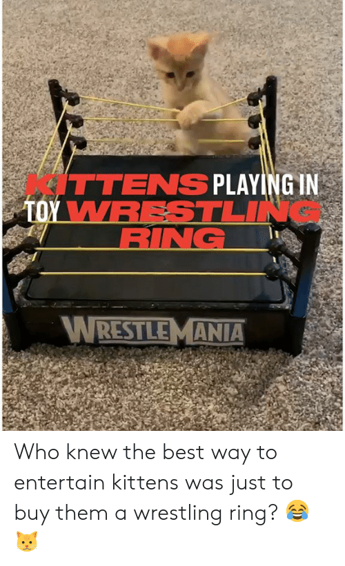 Buy: ITTENS PLAYING IN  TOY WRESTLIN  RING  WRESTLEMANIA Who knew the best way to entertain kittens was just to buy them a wrestling ring? 😂🐱