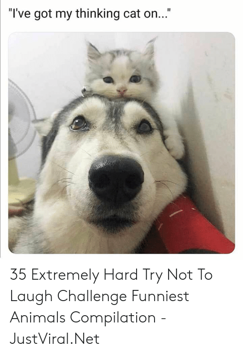 """Animals, Got, and Net: """"I've got my thinking cat on..."""" 35 Extremely Hard Try Not To Laugh Challenge Funniest Animals Compilation - JustViral.Net"""