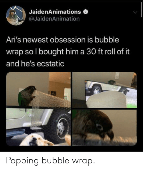 newest: JaidenAnimations  @JaidenAnimation  Ari's newest obsession is bubble  wrap so I bought him a 30 ft roll of it  and he's ecstatic Popping bubble wrap.