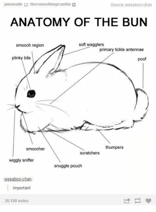 Humans of Tumblr, Source, and Tickle: jakemalik  the reisnothingicantbe  Source: Weeabo0-chan  ANATOMY OF THE BUN  soft wagglers  smooch region  primary tickle antennae  plinky bits  poof  thumpers  smoocher  scratchers  wiggly sniffer  snuggle pouch  eeaboo-chan  important  20,198 notes