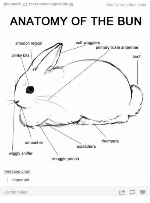 Poofes: jakemalikthereisnothingicantbe  Source: weeaboo-chan  ANATOMY OF THE BUN  smooch region  soft wagglers  primary tickle antennae  plinky bits  poof  smoocher  scratchers thumpers  wiggly sniffer  snuggle pouch  important  20,198 notes