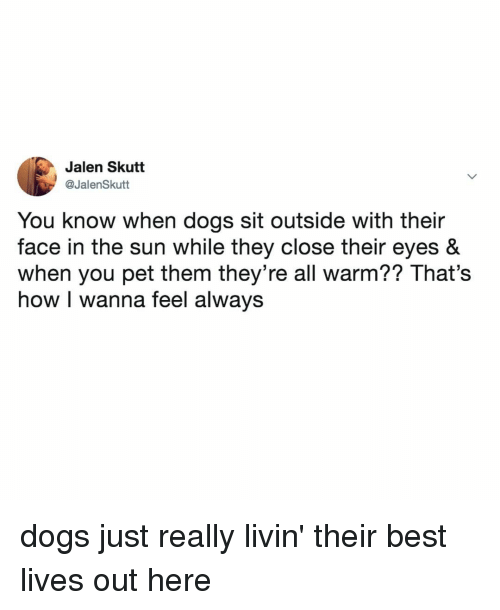 Dogs, Best, and Relatable: Jalen Skutt  @JalenSkutt  You know when dogs sit outside with their  face in the sun while they close their eyes &  when you pet them they're all warm?? That's  how I wanna feel always dogs just really livin' their best lives out here