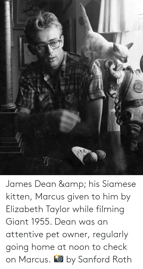 attentive: James Dean & his Siamese kitten, Marcus given to him by Elizabeth Taylor while filming Giant 1955. Dean was an attentive pet owner, regularly going home at noon to check on Marcus. 📸 by Sanford Roth