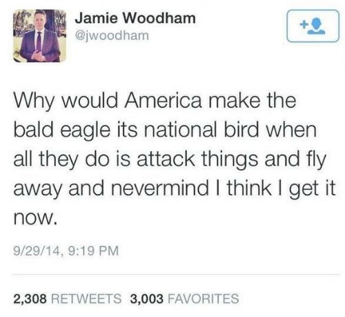 Eagle: Jamie Woodham  @jwoodham  Why would America make the  bald eagle its national bird when  all they do is attack things and fly  away and nevermind I think I get it  now.  9/29/14, 9:19 PM  2,308 RETWEETS 3,003 FAVORITES