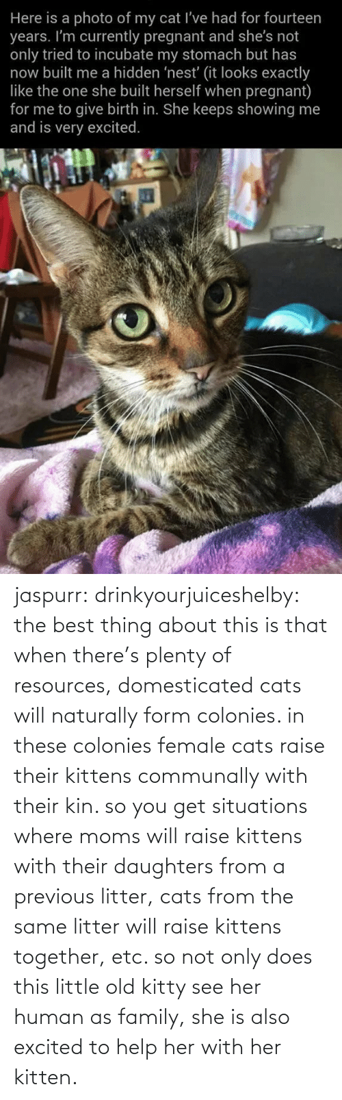 this is: jaspurr:  drinkyourjuiceshelby:    the best thing about this is that when there's plenty of resources, domesticated cats will naturally form colonies. in these colonies female cats raise their kittens communally with their kin. so you get situations where moms will raise kittens with their daughters from a previous litter, cats from the same litter will raise kittens together, etc. so not only does this little old kitty see her human as family, she is also excited to help her with her kitten.