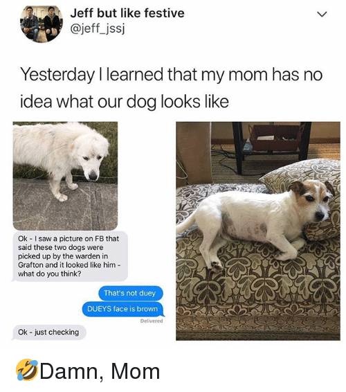 Dogs, Memes, and Saw: Jeff but like festive  @jeff_jssj  Yesterday I learned that my mom has no  idea what our dog looks like  Ok I saw a picture on FB that  said these two dogs were  picked up by the warden in  Grafton and it looked like him  what do you think?  That's not duey  DUEYS face is brown  Delivered  Ok -just checking 🤣Damn, Mom