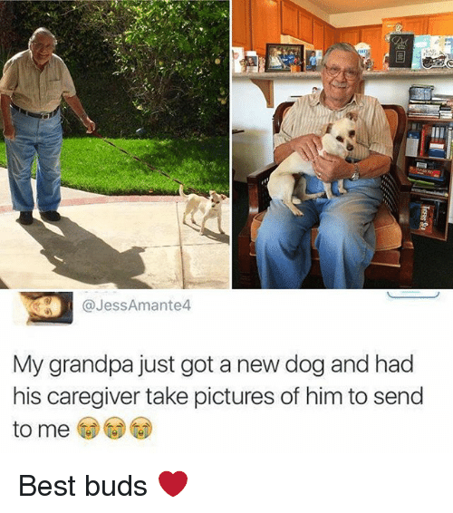 Memes, Grandpa, and Best: @JessAmante4  My grandpa just got a new dog and had  his caregiver take pictures of him to send  to me Best buds ❤️