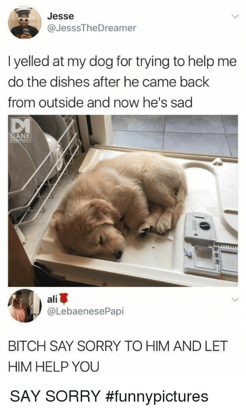 Ali, Bitch, and Dank: Jesse  @JesssTheDreamer  I yelled at my dog for trying to help me  do the dishes after he came back  from outside and now he's sad  DANK  MEREOLOGY  ali  @LebaenesePapi  BITCH SAY SORRY TO HIM AND LET  HIM HELP YOU SAY SORRY #funnypictures