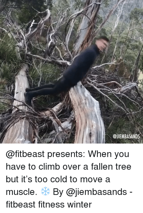 Memes, Winter, and Tree: @JIEMBASAND @fitbeast presents: When you have to climb over a fallen tree but it's too cold to move a muscle. ❄️ By @jiembasands - fitbeast fitness winter