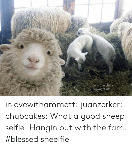 Blessed, Fam, and Selfie: John Churchman  Copyright 2015 inlovewithammett:  juanzerker:   chubcakes: What a good sheep selfie.  Hangin out with the fam. #blessed   sheelfie
