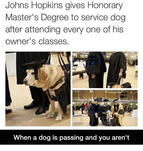 johns hopkins: Johns Hopkins gives Honorary  Master's Degree to service dog  after attending every one of his  owner's classes.  When a dog is passing and you aren't