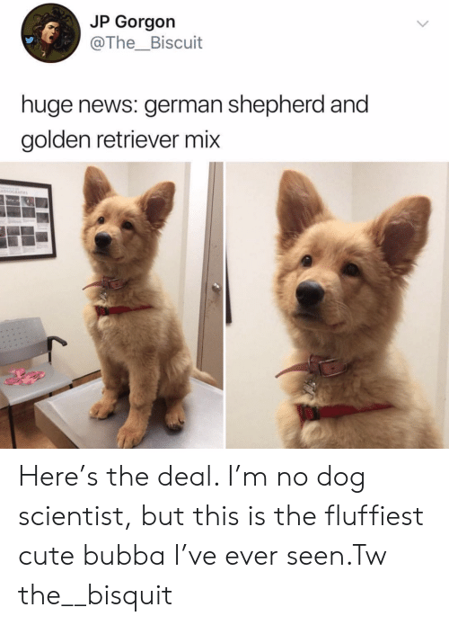 No Dog: JP Gorgon  @The_Biscuit  huge news: german shepherd and  golden retriever mix Here's the deal. I'm no dog scientist, but this is the fluffiest cute bubba I've ever seen.Tw the__bisquit