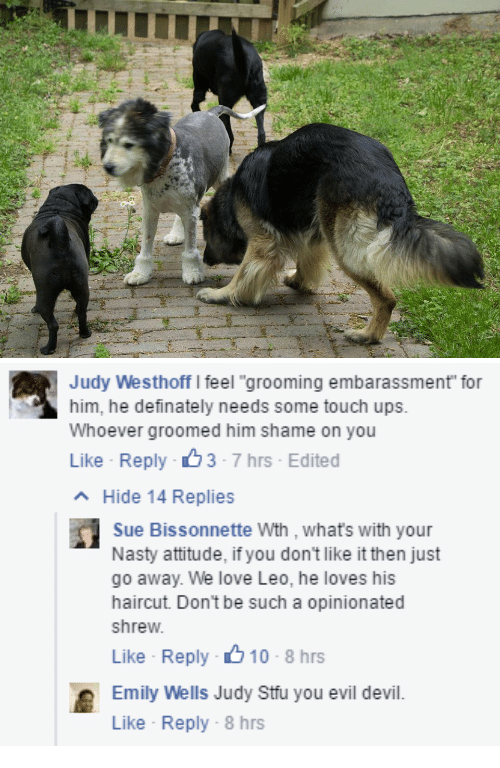 """Haircut, Love, and Nasty: Judy Westhoff I feel """"grooming embarassment for  him, he definately needs some touch ups.  Whoever groomed him shame on you  Like Reply 3-7 hrs Edited  Hide 14 Replies  Sue Bissonnette Wth , whats with your  Nasty attitude, if you don't like it then just  go away. We love Leo, he loves his  haircut. Don't be such a opinionated  shrew  Like Reply 10-8 hrs  Emily Well Judy Stuyou evil devil.  Like Reply-8 hrs"""