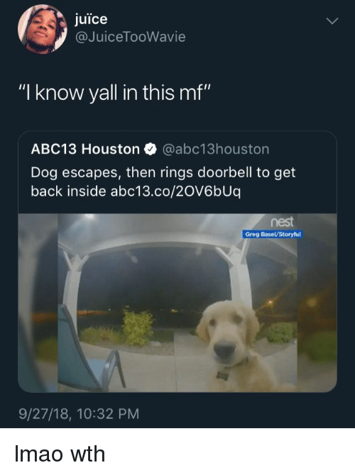 """Juice, Lmao, and Abc13: juice  @JuiceTooWavie  """"I know yall in this mf""""  ABC13 Houston @abc13houston  Dog escapes, then rings doorbell to get  back inside abc13.co/20V6bUq  nest  9/27/18, 10:32 PM lmao wth"""