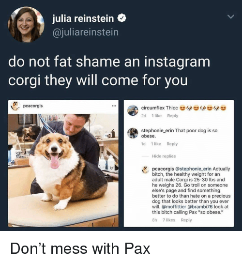 """Bitch, Corgi, and Instagram: julia reinstein  @juliareinstein  do not fat shame an instagram  corgi they will come for you  pcacorgis  circumflex ThiccG  2d 1 like Reply  stephonie erin That poor dog is so  obese  1d 1 like Reply  Hide replies  pcacorgis @stephonie erin Actually  bitch, the healthy weight for an  adult male Corgi is 25-30 lbs and  he weighs 26. Go troll on someone  else's page and find something  better to do than hate on a precious  dog that looks better than you ever  will. @moffittier @brambi76 look at  this bitch calling Pax """"so obese.""""  8h 7 likes Reply Don't mess with Pax"""