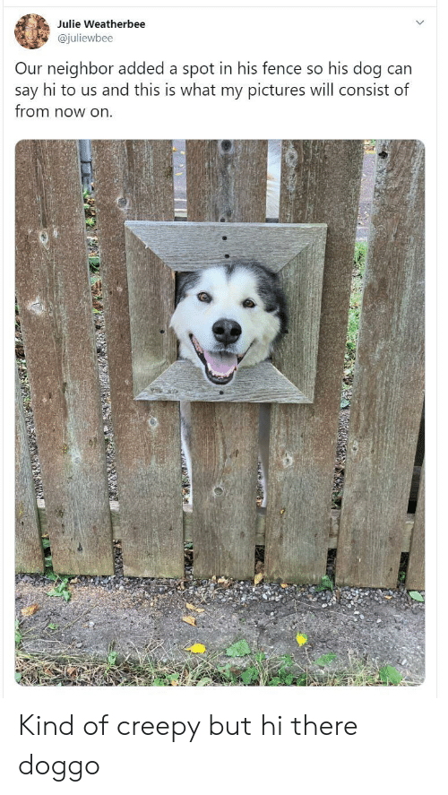 say hi: Julie Weatherbee  @juliewbee  Our neighbor added a spot in his fence so his dog can  say hi to us and this is what my pictures will consist of  from now on Kind of creepy but hi there doggo
