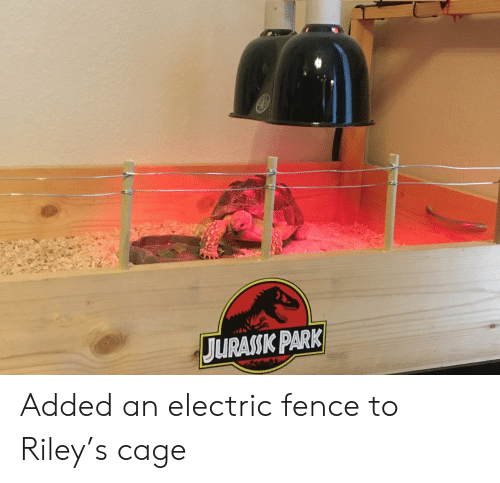 Park, Cage, and Fence: JURASSK PARK Added an electric fence to Riley's cage