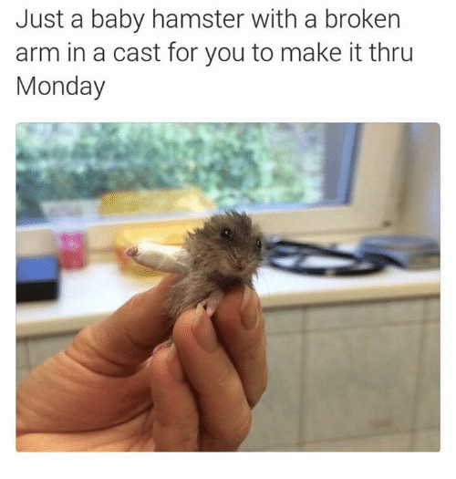 Broken Arms: Just a baby hamster with a broken  arm in a cast for you to make it thru  Monday
