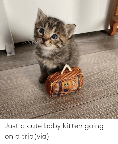 Just A: Just a cute baby kitten going on a trip(via)