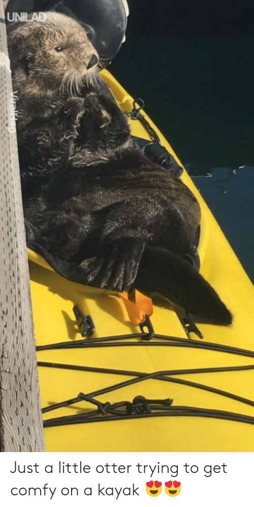 comfy: Just a little otter trying to get comfy on a kayak 😍😍