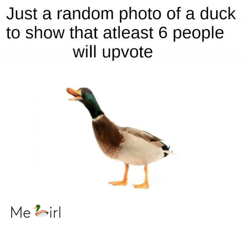 random: Just a random photo of a duck  to show that atleast 6 people  will upvote Me🦆irl