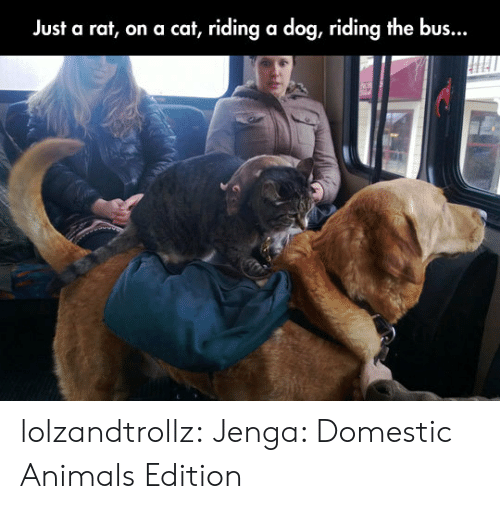 Animals, Tumblr, and Blog: Just a rat, on a cat, riding a dog, riding the bus... lolzandtrollz:  Jenga: Domestic Animals Edition