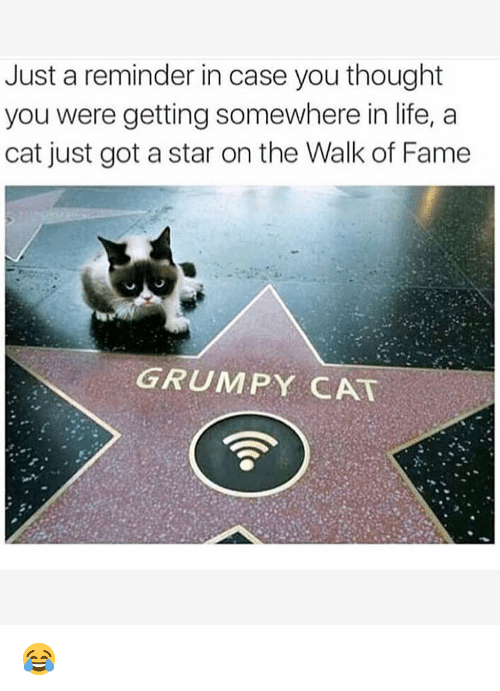 The Walk: Just a reminder in case you thought  you were getting somewhere in life, a  cat just got a star on the Walk of Fame  GRUMPY CAT 😂