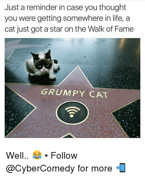 Grumpy Cats: Just a reminder in case you thought  you were getting somewhere in life, a  cat just got a star on the Walk of Fame  GRUMPY CAT Well.. 😂 • Follow @CyberComedy for more 📲