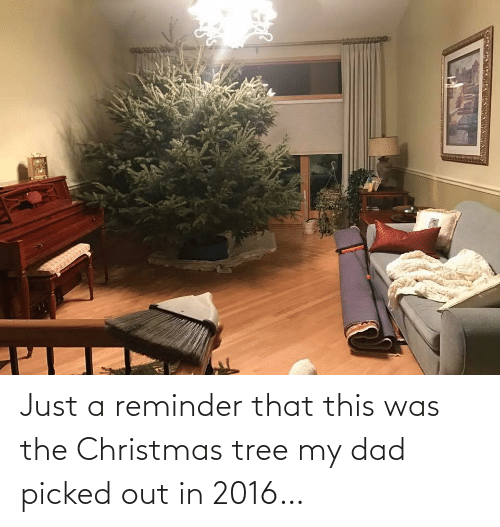 reminder: Just a reminder that this was the Christmas tree my dad picked out in 2016…