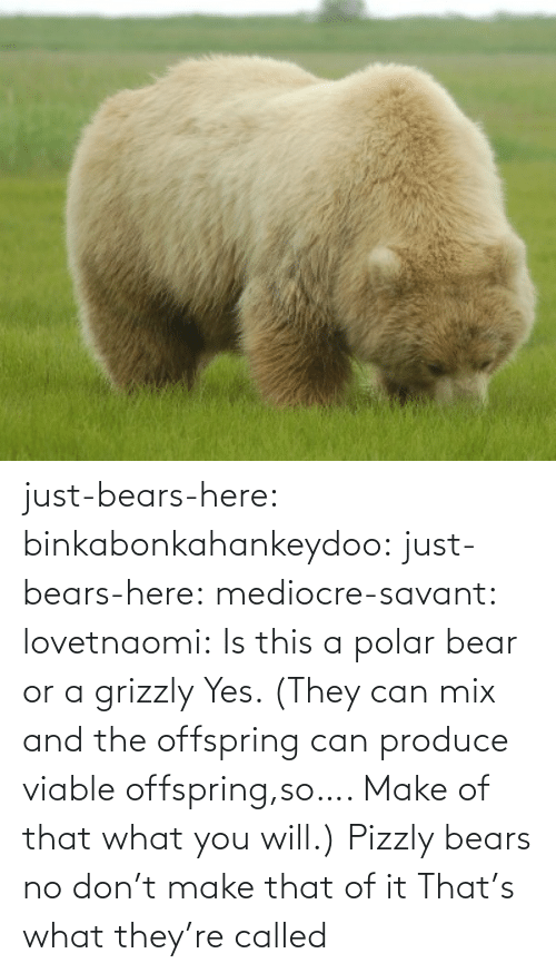 Produce: just-bears-here: binkabonkahankeydoo:   just-bears-here:  mediocre-savant:   lovetnaomi:  Is this a polar bear or a grizzly   Yes. (They can mix and the offspring can produce viable offspring,so…. Make of that what you will.)   Pizzly bears   no don't make that of it   That's what they're called
