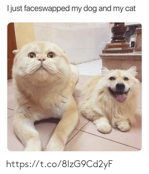 Memes, 🤖, and Dog: just faceswapped my dog and my cat https://t.co/8IzG9Cd2yF
