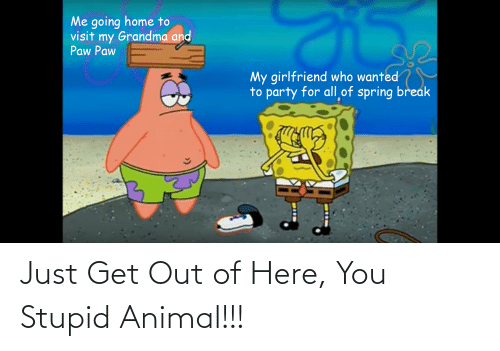 get-out-of-here: Just Get Out of Here, You Stupid Animal!!!