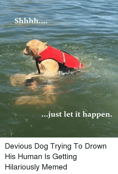 Memed: ..just let it happen. Devious Dog Trying To Drown His Human Is Getting Hilariously Memed