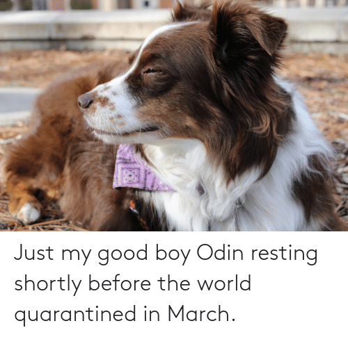 Resting: Just my good boy Odin resting shortly before the world quarantined in March.