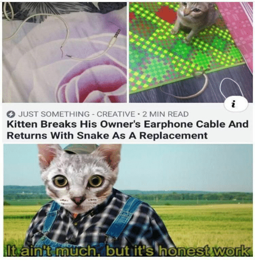 Returns: JUST SOMETHING CREATIVE 2 MIN READ  Kitten Breaks His Owner's Earphone Cable And  Returns With Snake As A Replacement  It ainit much, but it's honest work