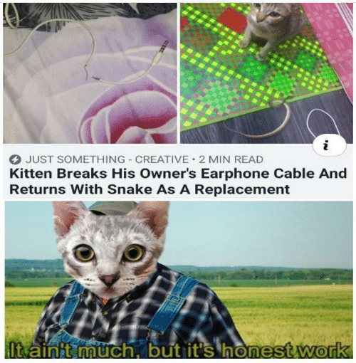 Returns: JUST SOMETHING CREATIVE 2 MIN READ  Kitten Breaks His Owner's Earphone Cable And  Returns With Snake As A Replacement  It ainit much, but it's honest.work