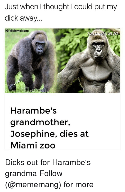 Harambism: Just when thought could put my  dick away  G: @MemeMang  LWT  Harambe's  grandmother,  Josephine, dies at  Miami zoo Dicks out for Harambe's grandma Follow (@mememang) for more