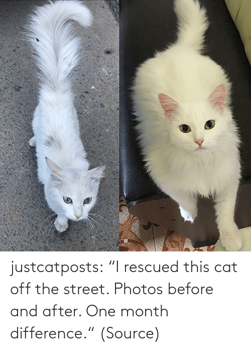 "cat: justcatposts:  ""I rescued this cat off the street. Photos before and after. One month difference."" (Source)"