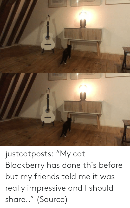 "told me: justcatposts:  ""My cat Blackberry has done this before but my friends told me it was really impressive and I should share.."" (Source)"