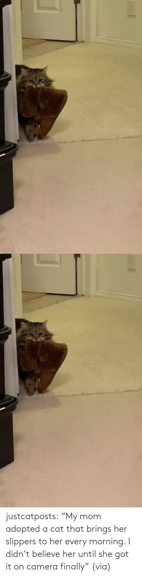 "believe: justcatposts:  ""My mom adopted a cat that brings her slippers to her every morning. I didn't believe her until she got it on camera finally"" (via)"