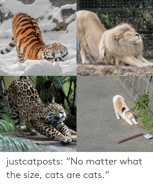 "Cats Are: justcatposts:  ""No matter what the size, cats are cats."""
