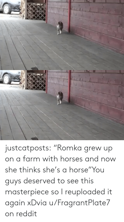 "And Now: justcatposts:  ""Romka grew up on a farm with horses and now she thinks she's a horse""You guys deserved to see this masterpiece so I reuploaded it again xDvia u/FragrantPlate7 on reddit"
