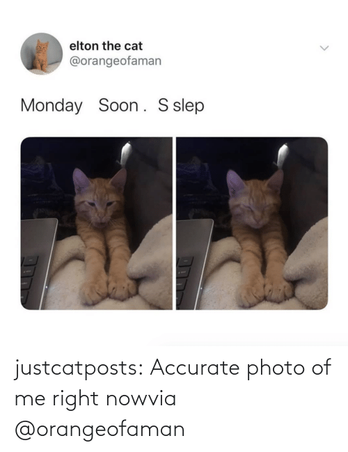 right now: justcatposts:  Accurate photo of me right nowvia @orangeofaman