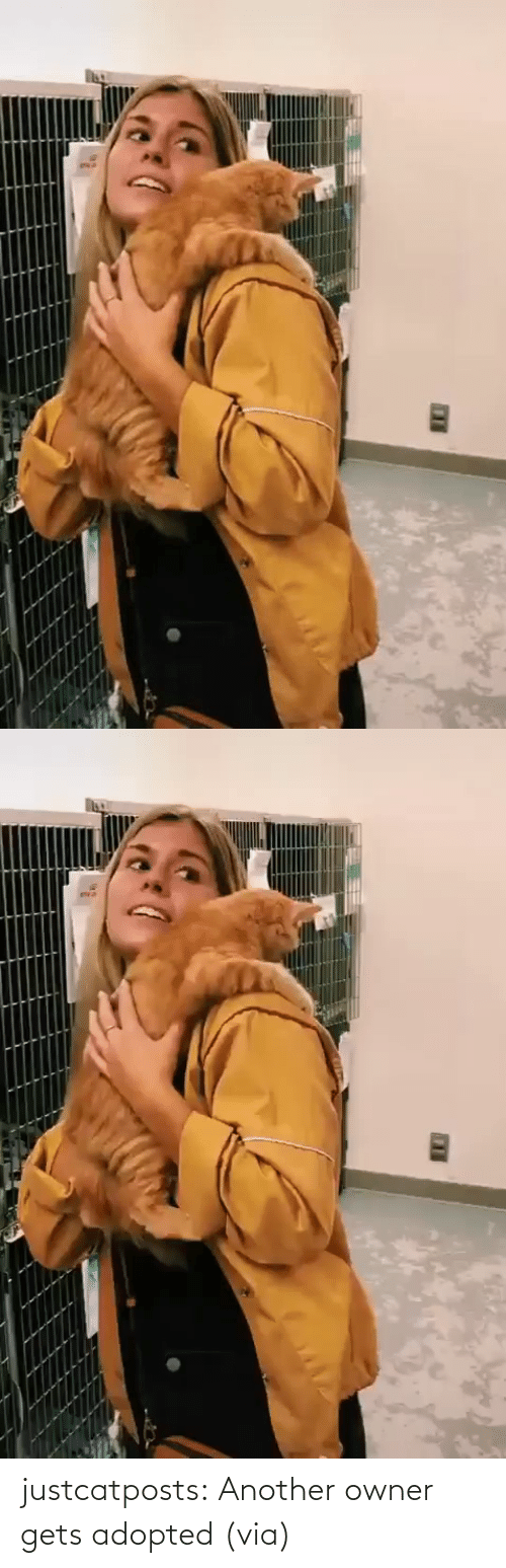 owner: justcatposts: Another owner gets adopted (via)