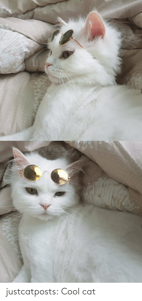 Cool: justcatposts:  Cool cat