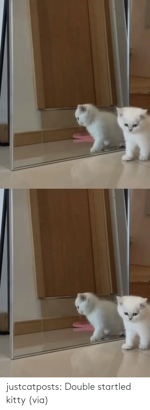 double: justcatposts:  Double startled kitty (via)